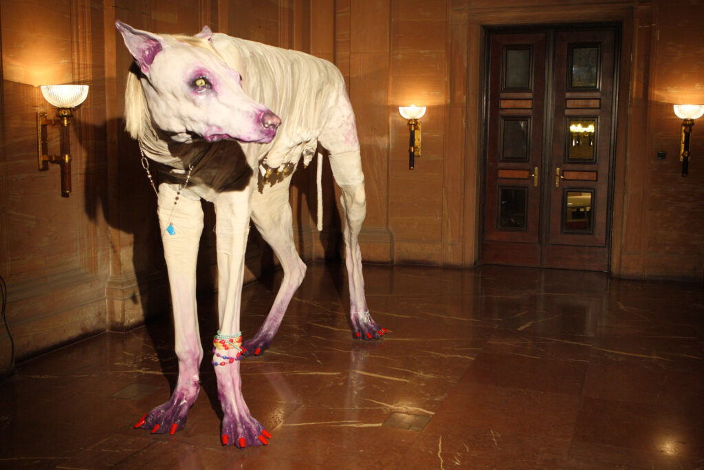Na zdjęciu widzimy rzeźbę białego, dużego psa lub wilczycy z pomalowanymi na czerwono pazurami, kilkoma bransoletkami z koralików na jednej z łap oraz naszyjnikiem. Obiekt stoi na marmurowej podłodze w holu zamkowym. Za nim znajdują się drewniane, przeszkolone drzwi oraz kilka zapalonych kryształowych kinkietów.